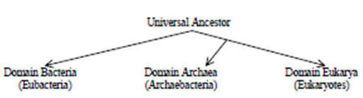 classification kingdoms essay questions